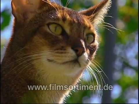 Schulfilm: WAS IST WAS - KATZEN (DVD / Vorschau)