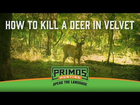 How to Shoot Deer in Velvet video thumbnail