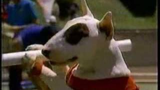Budweisers 2014 super bowl commercial puppy love bud light spuds mckenzie commercial during the olympics aloadofball Gallery