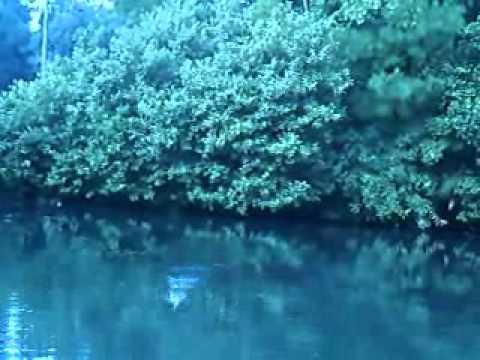 largemouth bass fishing at pond