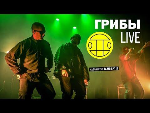 Грибы – Полный концерт в Калининграде // 14.05.2017