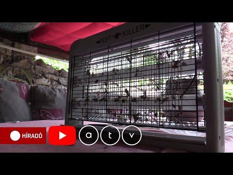 Kezelés parazitákból származó rókagombával történő kezelés