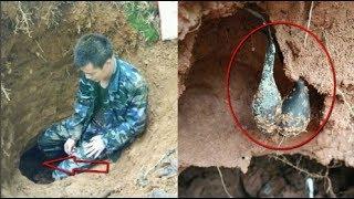 Đào ổ kiến để tìm giống nấm quý hiếm, giá 68 triệu/kg