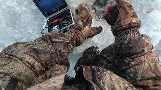 Ловля зимой сазана на балансир