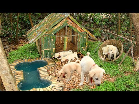 Build Mini Swimming Pool For Dogs And Build Bamboo Dogs House