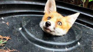 🙀 10 Most Inspiring Animal Rescues 🐾🐶