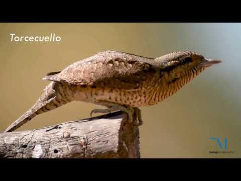 Aves forestales de la provincia de Málaga
