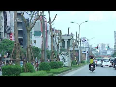 Hà Nội sẽ trồng 800 000 cây xanh dịp Tết Đinh Dậu