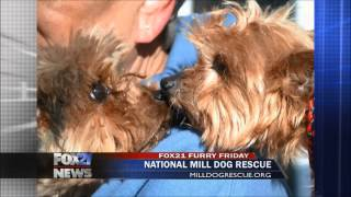 Furry Friday features National Mill Dog Rescue