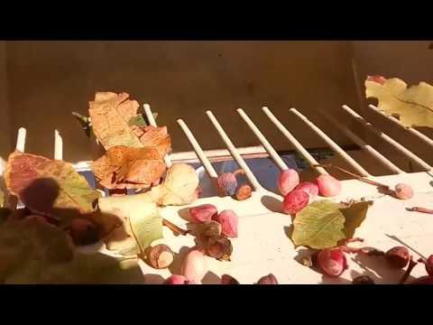 Limpiadora de hojas usada con cinta transportadora de 2000 a 4000Kg/h.