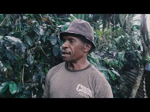 Peninjauan Kebun Kopi Di Mulia Kabupaten Puncak Jaya