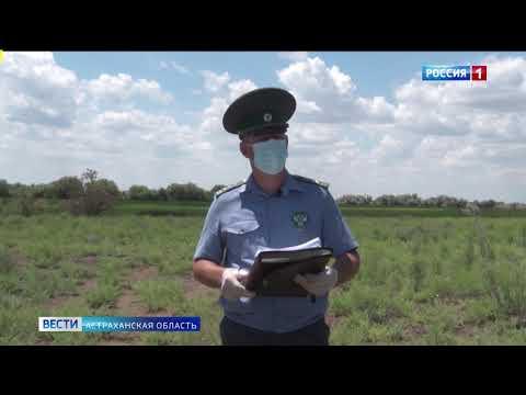В Астраханской области Управлением Россельхознадзора выявлен земельный участок сельскохозяйственного назначения, заросший сорной растительностью