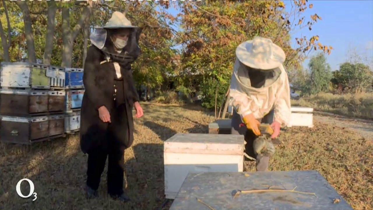 Πως η κλιματική αλλαγή επηρεάζει τη μελισσοκομία| 07/12/2020 | ΕΡΤ