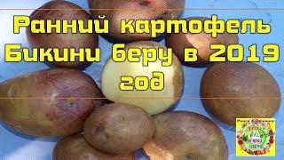 Ранний картофель Бикини беру в 2019 год