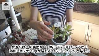 Vol.77多肉植物の育て方