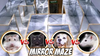 MIRROR MAZE COMPETITION - CAT🐱 / RAT🐭 / DOG🐶 / HAMSTER🐹