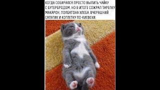 Демотиваторы про котиков и не только №1