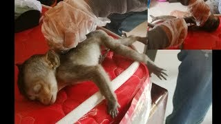 At 5 pm I sent Lori baby to veterinarian for treatment and injection | Monkey Daily 725