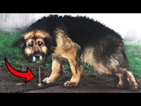 Parazita törzsek és psa