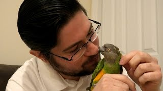 What is my favorite kind of parrot?