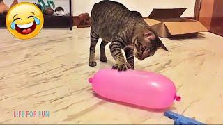 Смешные видео - КОШКИ 2021???? Смешные коты приколы с котами до слез – Смешные кошки – Funny Cats