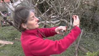 How To: Prune apple trees
