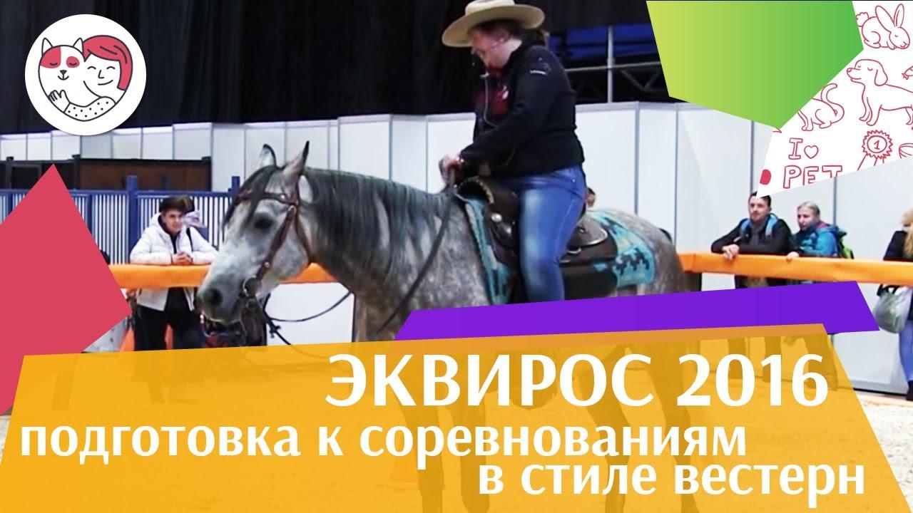 Подготовка лошади к соревнованиям в стиле вестерн ЭКВИРОС 2016 на ilikepet