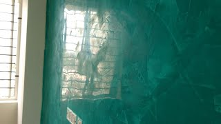 Interior Glass Finish  Texture Design On Wall Simply |technique By Asian Paints India