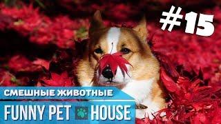 СМЕШНЫЕ ЖИВОТНЫЕ И ПИТОМЦЫ #15 ОКТЯБРЬ 2018 [Funny Pet House] Смешные животные