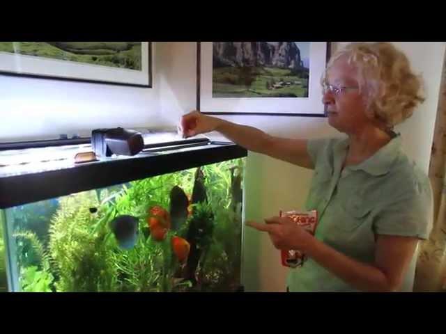Aquarium Routine Maintenance
