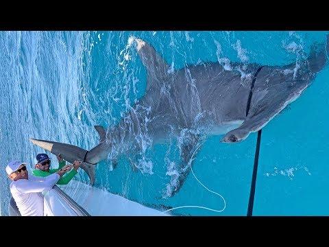 Catching a Massive Hammer Head Shark