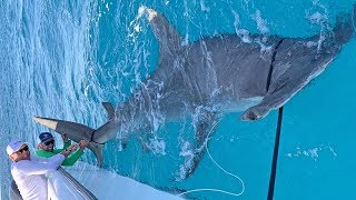 MASSIVE World Record Size Hammerhead Shark Caught Fishing with Greg Norman