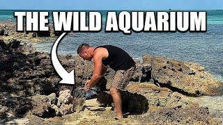 BUILDING AN AQUARIUM AND FISH TRAP!