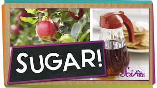 Where Does Sugar Come From? | Science for Kids