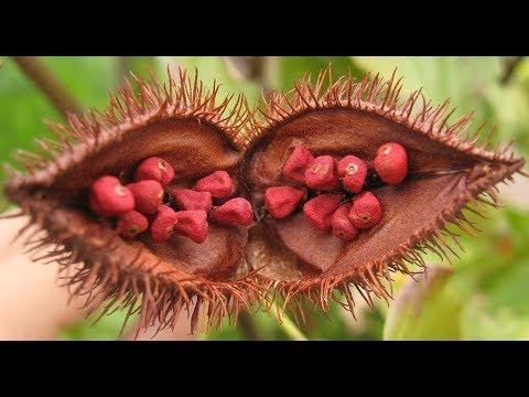 Alimentos en la pielonefritis y la diabetes
