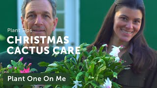 Schlumbergera (Christmas Cactus) Care and Propagation — Plant One On Me — Ep 143