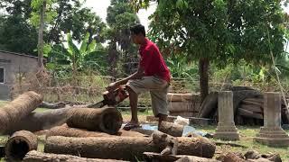 Cutting palm tree