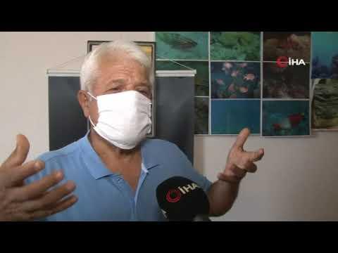 Denizin kalbi Posidonia' çayırları yok olmaya başladı