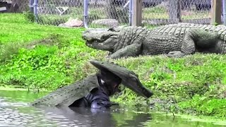 He Put On an Alligator Costume And That's What Happened Next