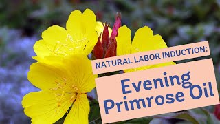 Natural Labor Induction Series: Evidence on Evening Primrose Oil