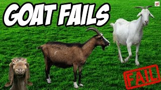 Funny Goat Fails Compilation