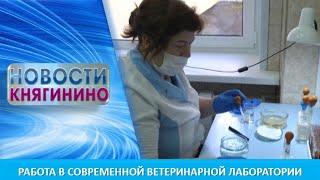 Работа в современной ветеринарной лаборатории