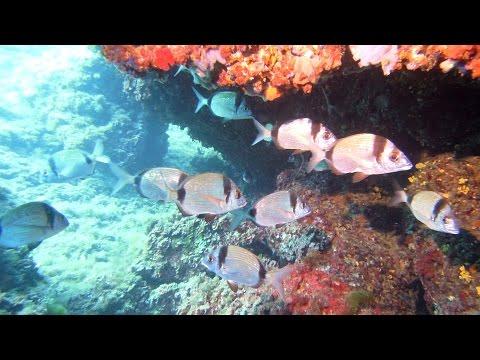 Scuba Diving Mallorca July 2015