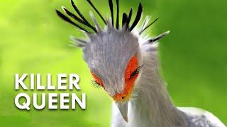 killer queen - ฟรีวิดีโอออนไลน์ - ดูทีวีออนไลน์ - คลิปวิดีโอ