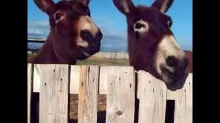 preview picture of video 'Feeding donkeys in Paphos, Cyprus'