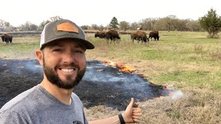 We set our pasture on FIRE...watch how the bison react!