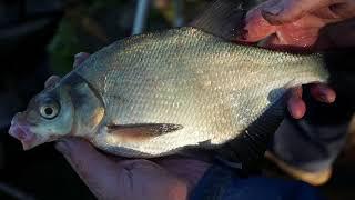Рыбалка канал им москвы отчеты о рыбалке