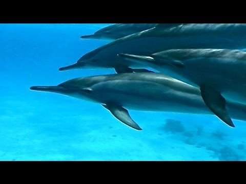 Dolphin House - Marsa Alam - Egypt
