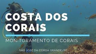 Mergulho de monitoramento na APA Costa dos Corais