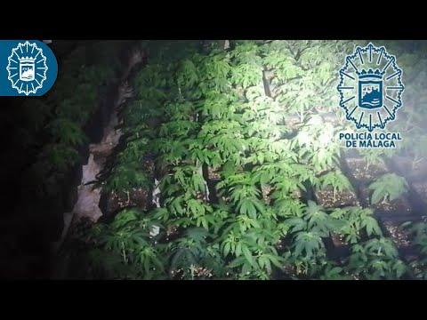 Un incendio en una vivienda descubre una plantación de marihuana